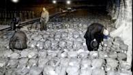 100 de tone de aur nazist descoperite intr-o mina de sare